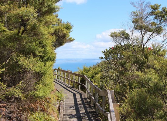 Rangitoto Walking Track Landing.jpg