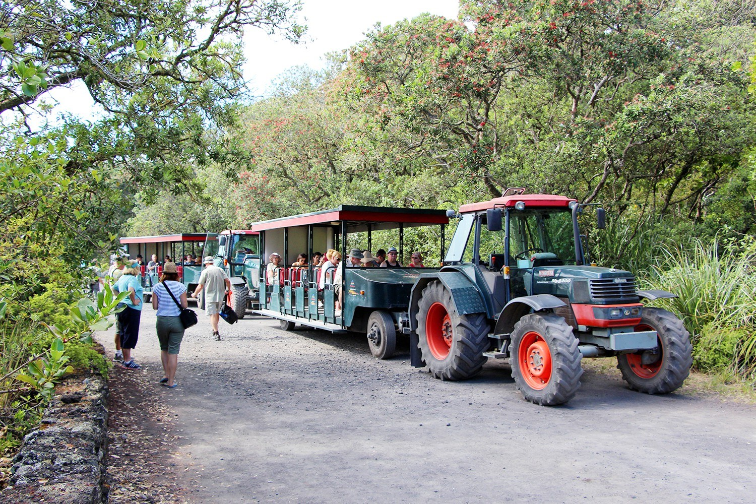 Rangitoto day tour.jpg